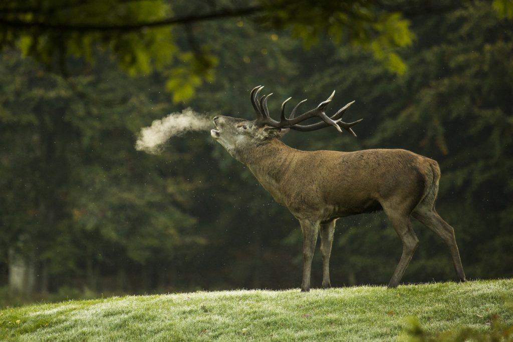 Wild spotten op de Veluwe